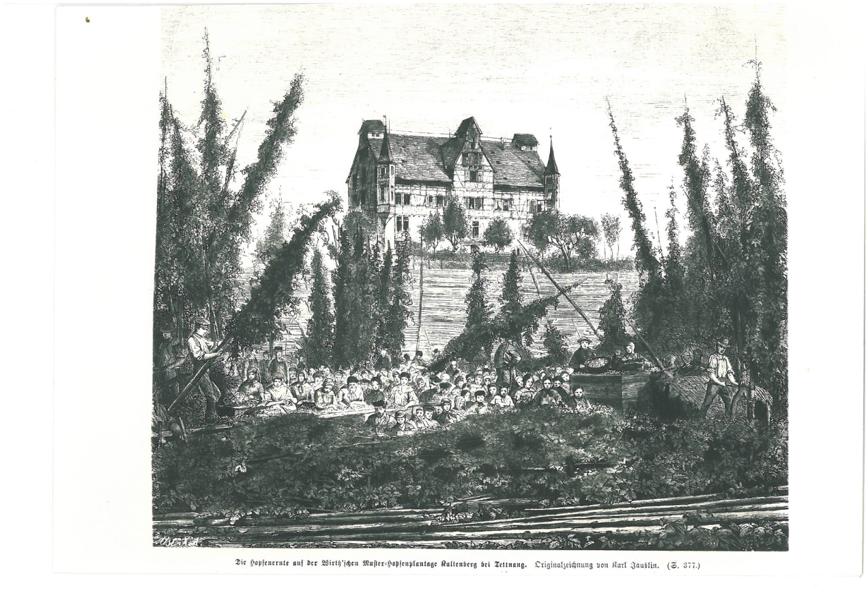 Gut Kaltenberg, Geschichte des Hopfenanbaus in Tettnang