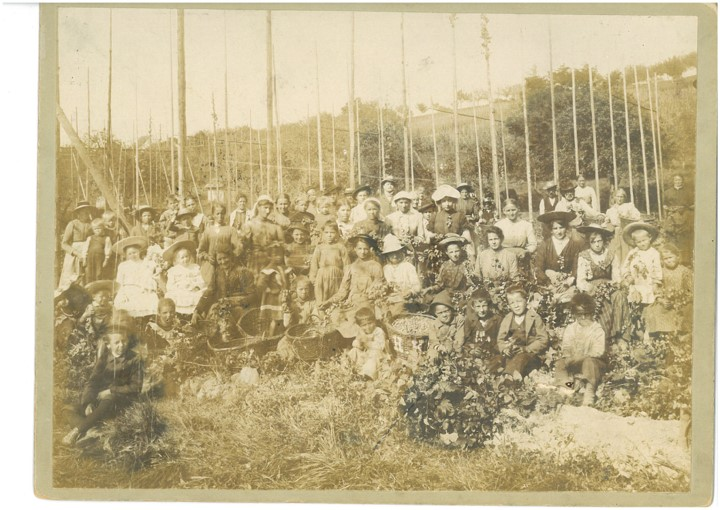 Handpflücke, Geschichte des Hopfenanbaus in Tettnang
